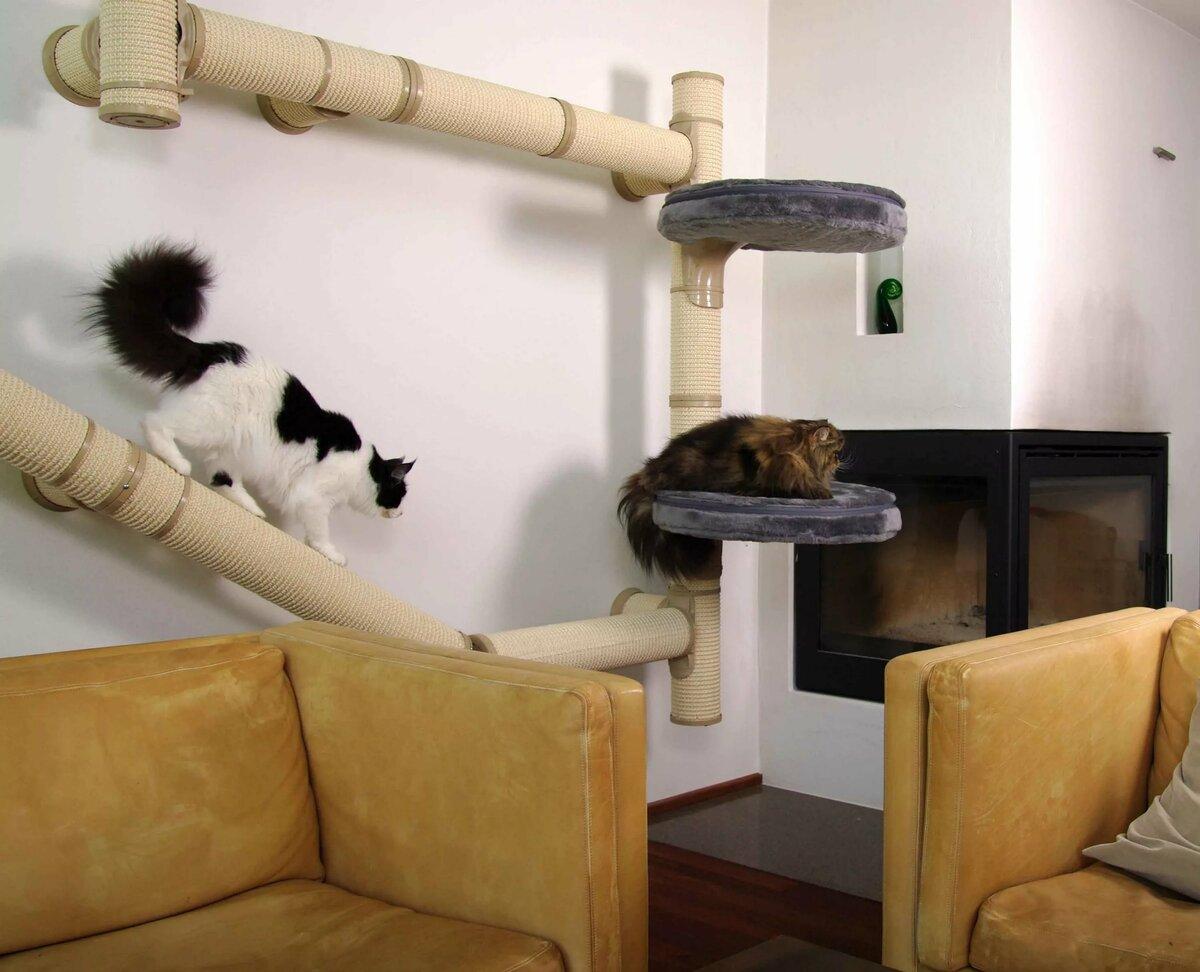 Настройте пространство в доме для своей кошки